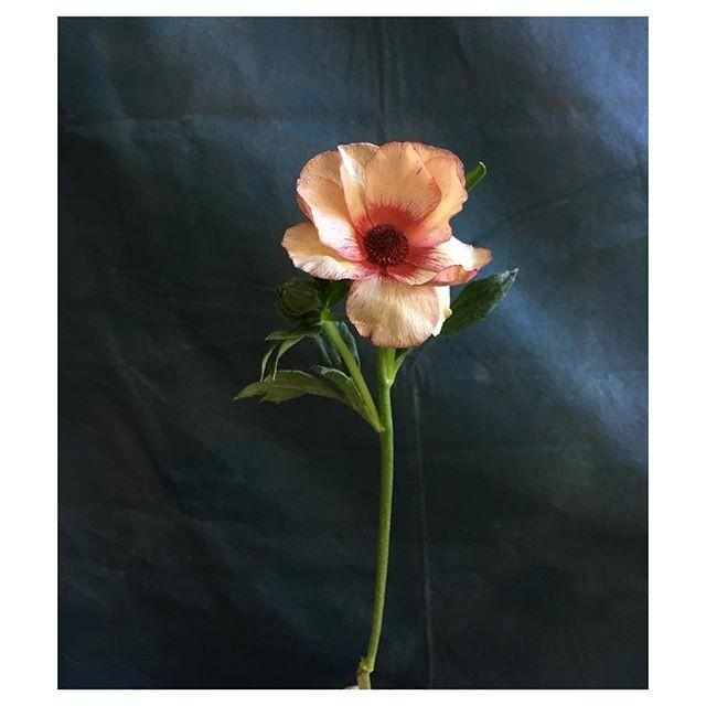 Poppies & Posies