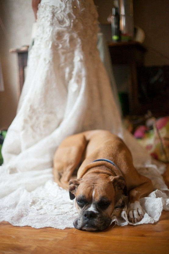 زفاف - الحيوانات الأليفة في حفل الزفاف