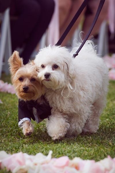 Свадьба - Pets In Wedding