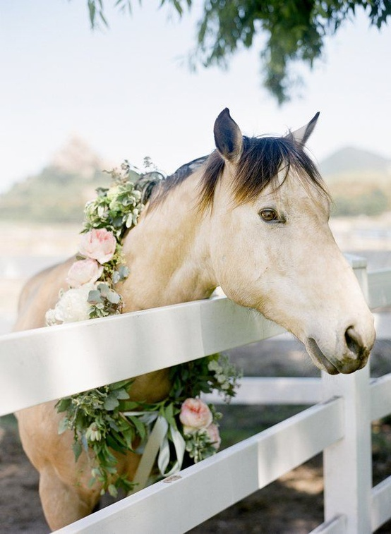 Hochzeit - Pets!