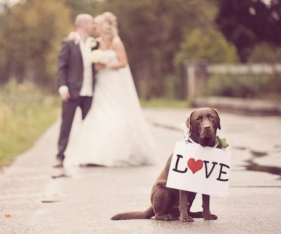 زفاف - Pets In Wedding