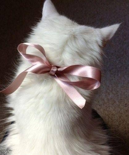 Свадьба - Pink Prrrfection