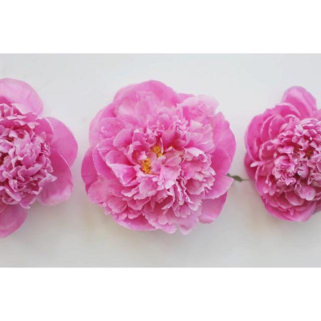 Mariage - Poppies & Posies