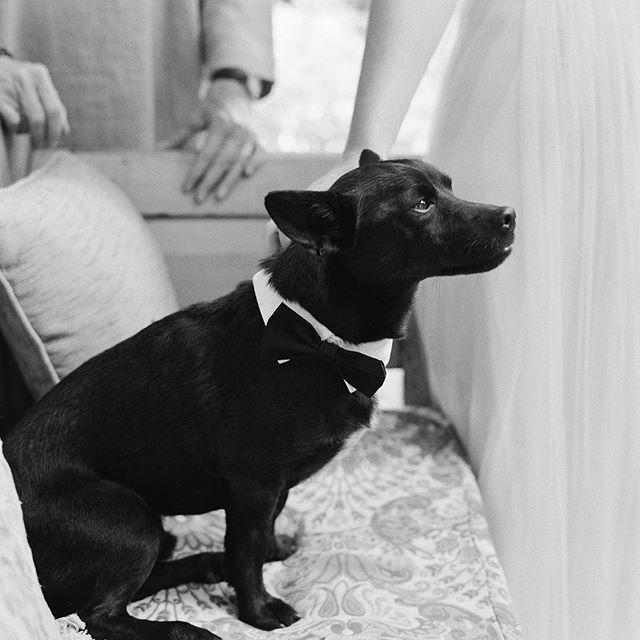Свадьба - joel serrato