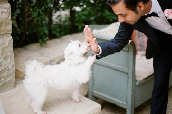 زفاف - الحيوانات الأليفة!