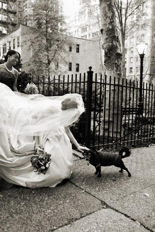 Mariage - Animaux!