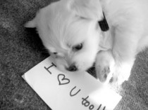 wedding photo - Cute Dog Fotos und Bilder ♥ Black and White Love Photo