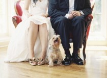 wedding photo - Pets!
